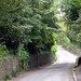 Leafy Road (Wilmington East Sussex)