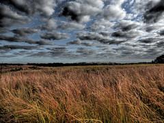 prairie views