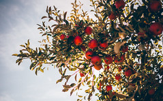 The Orchard from Below