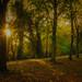 Autumn Footpath - St.Ives