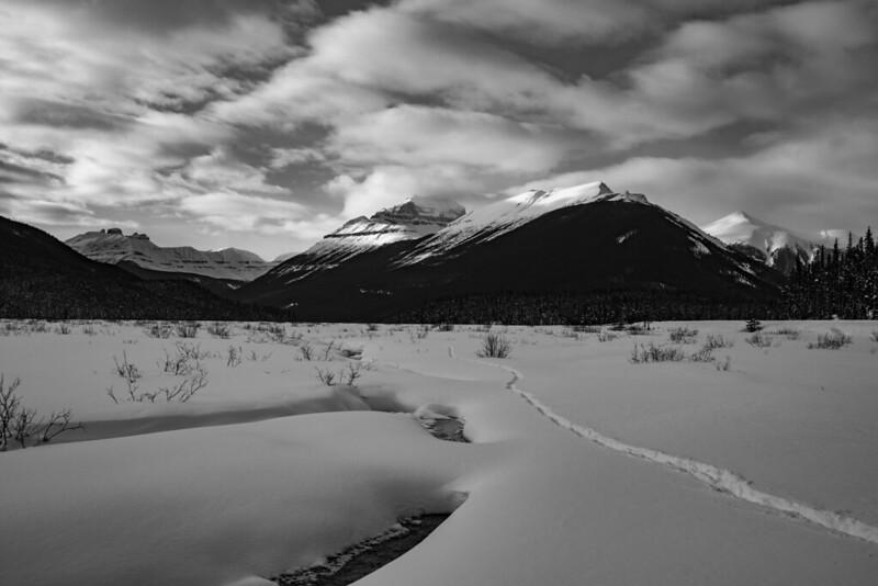 Snow Tracks B&W