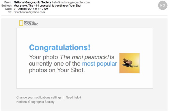 Your photo The mini peacock is trending on Your Shot