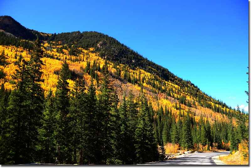 Fall colors, Guanella Pass, Colorado (39)