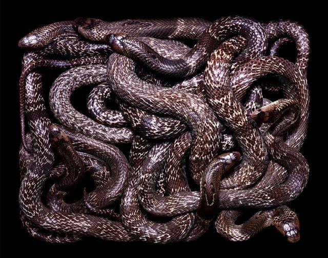 snake_art_04
