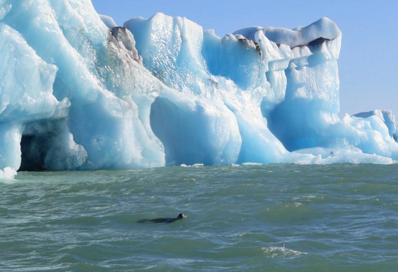 jokulsarlon-seal-glacier
