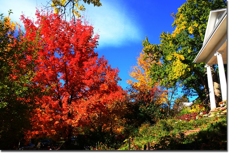 2017 Maple in Fall, Boulder, Colorado  (35)