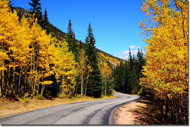 Fall colors, Guanella Pass, Colorado (24)