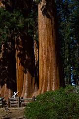 KingsCanyon-SequoiaNatParks-12