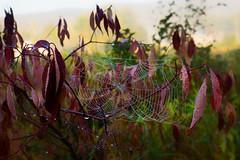 Web on crimson.