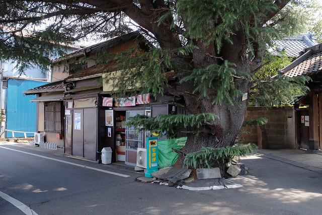 FUJI4604.jpg