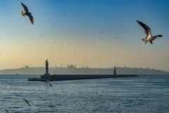 2013-Turquia-Istambul-0401.jpg