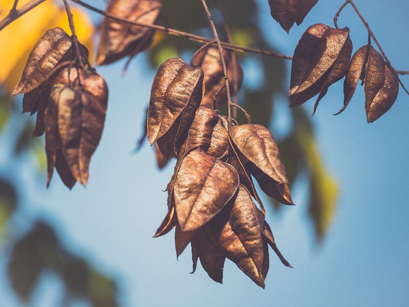 fall-19