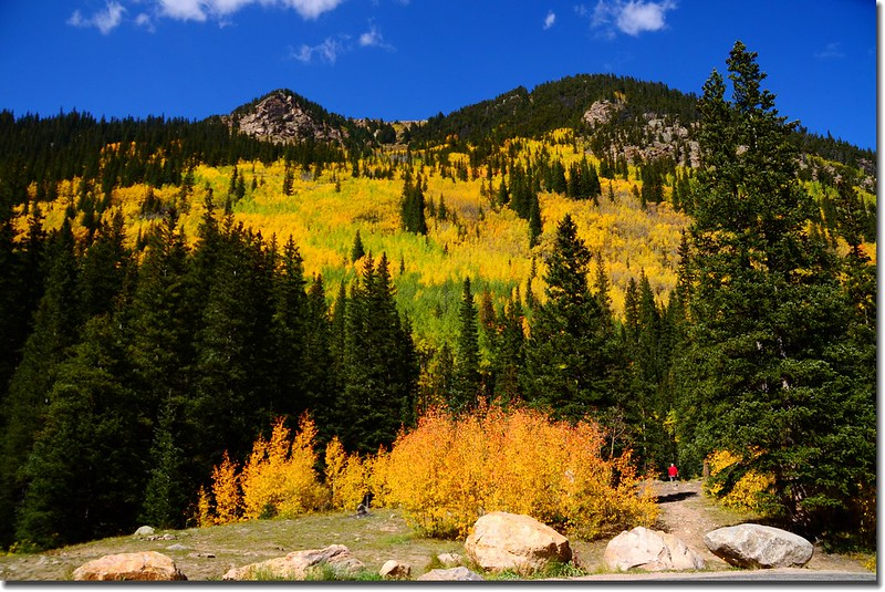 Fall colors, Guanella Pass, Colorado (20)