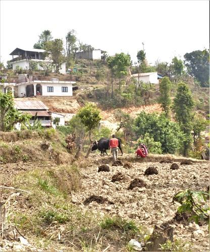 n-pokhara-Pagode-Paix-descente (4)