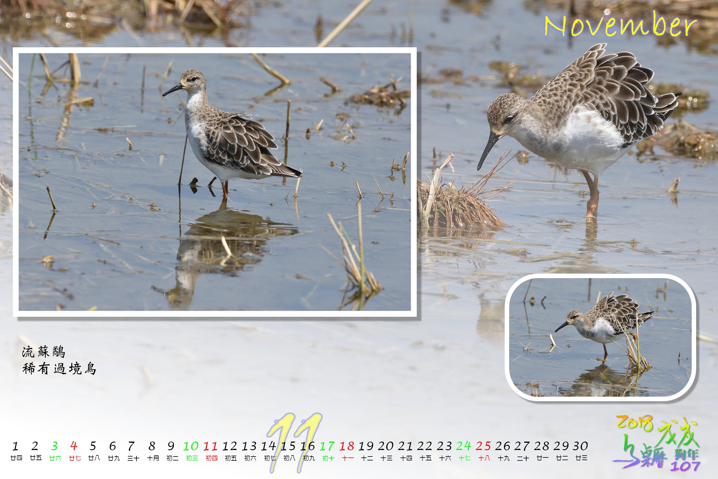Calendar2018_Alder2_11