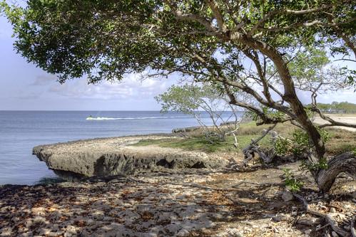 jetski aruba tree ocean sky cloud rocks leaves eaglebeach canon50d