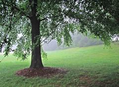 Rest Area, Pelham, North Carolina