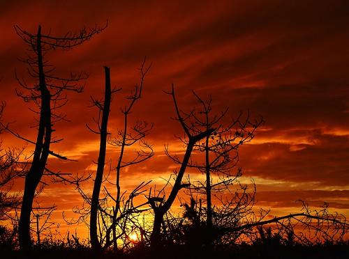 sunrise trees clouds silhouette red beach ocean rhode island ri westerly new england travel early edge world end atlantic east coast rwgrennan rgrennan ryan grennan nikon d610 morning weekapaug sand sky tree pine
