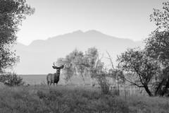 Overlooking the Herd