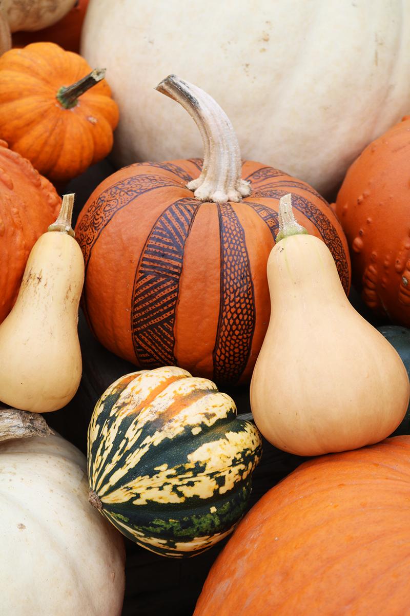 Adora Mehitabel Pumpkin Patch 1