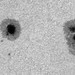 AR2682 and AR2683 (Barlow x 3, Drizzle x 3) by john.purvis