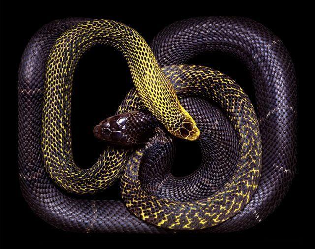 snake_art_05