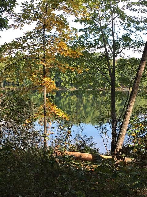 Seneca Creek SP ~ one Gold tree