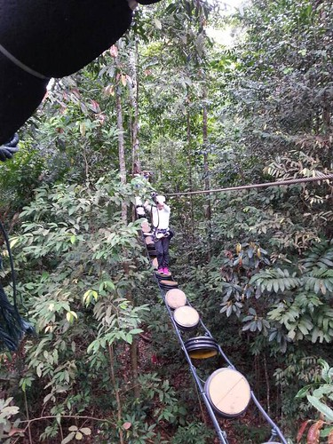 Challenges at skytrex
