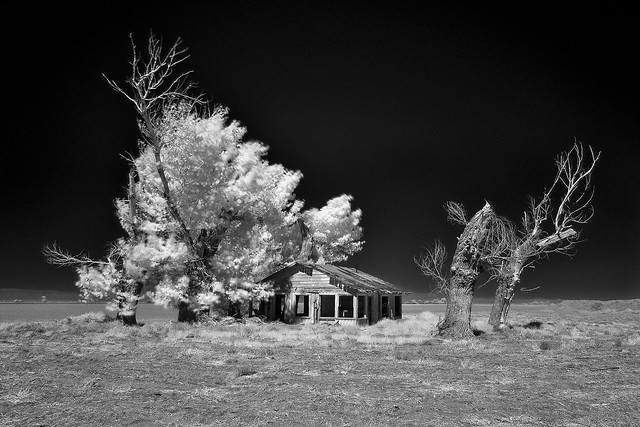 dirt farmer (infrared). mojave desert, ca. 2017.