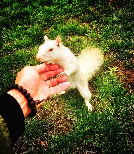 Toronto Ontario ~ Bellwoods Park ~ White Squirrel ...