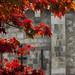 IMG_7743 - Bargate - Southampton - 12.10.17