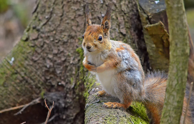 - Hi, I'm hungry...   Do you have some nuts?