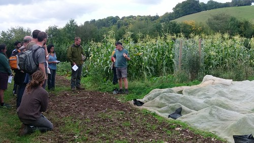 Agroforestry for Growers, Tolhurst Organics