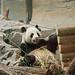 <p><a href=&quot;http://www.flickr.com/people/randyb-pics/&quot;>andyb83</a> posted a photo:</p>&#xA;&#xA;<p><a href=&quot;http://www.flickr.com/photos/randyb-pics/37471670331/&quot; title=&quot;Panda&quot;><img src=&quot;http://farm5.staticflickr.com/4451/37471670331_415e230355_m.jpg&quot; width=&quot;160&quot; height=&quot;240&quot; alt=&quot;Panda&quot; /></a></p>&#xA;&#xA;