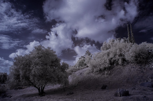 ruralscene lakeside infrared infraredphotography ir convertedinfraredcamera clouds trees highcontrast sky channelmixer