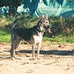 2017:10:08 14:25:43 - Hund - Rüde -Tarbek