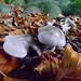Unidentified mushroom