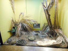 Reptile house: Venemous snakes