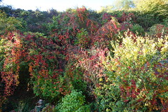 Herbst_25