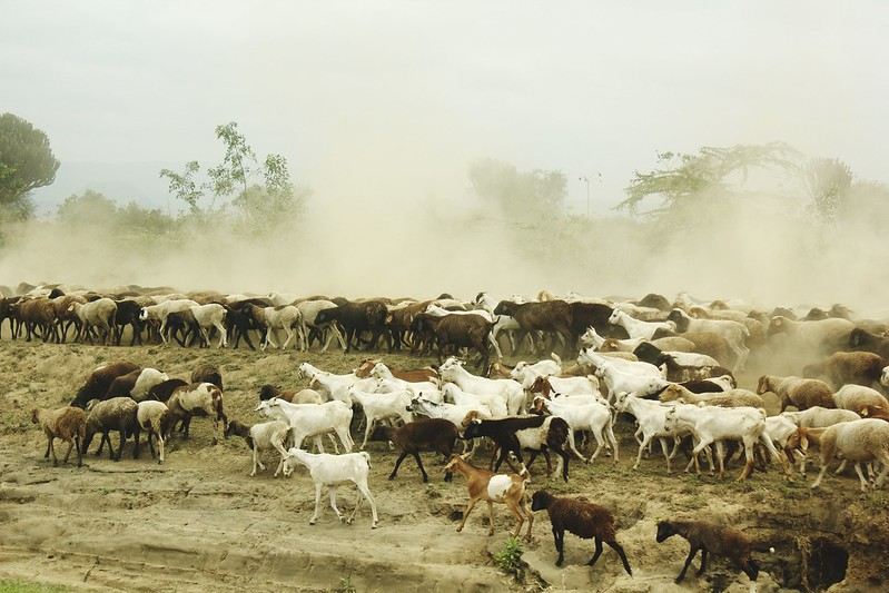 Maasai Mara 1 3