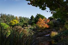 Botanic Gardens Edinburgh Oct 2017 -103