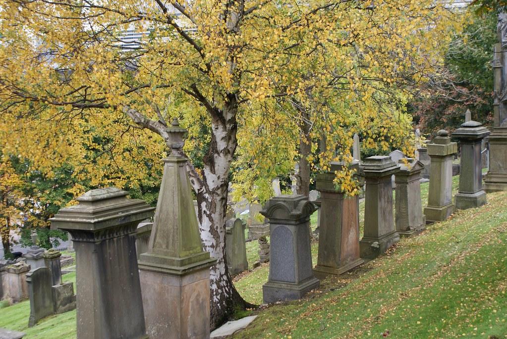 Bouleaux entre rangées de stèles à la Nécropolis de Glasgow.