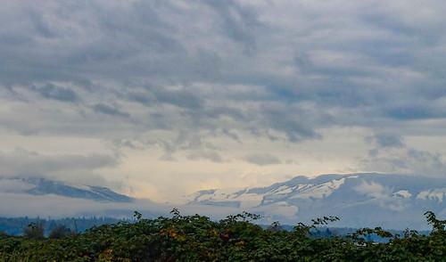 Skagit Valley Snow