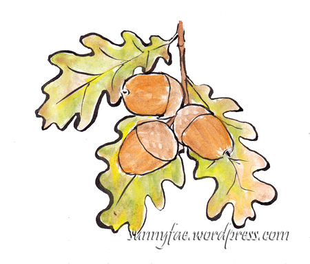acorn-sketches-1