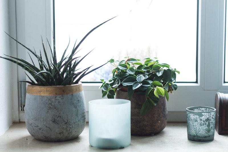 Fensterbank-Dekoration-Teelichter-Wald-Inspiration-Schlafzimmer-Pflanzen