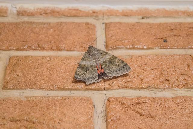 Οι πεταλούδες μπήκαν στα σπίτια λίγα λεπτά πριν την βροχή !