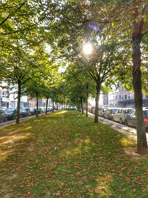 Autumn In Brussels