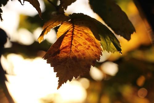warme Herbstsonnenstrahlen erhascht...