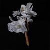 Orquídia II