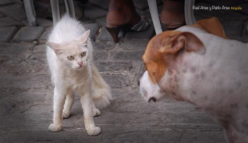 (699/17)  De perros y gatos (color)